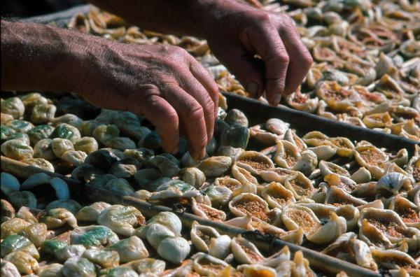 Fichi e pomodori Secchi: autentiche tradizioni salentine