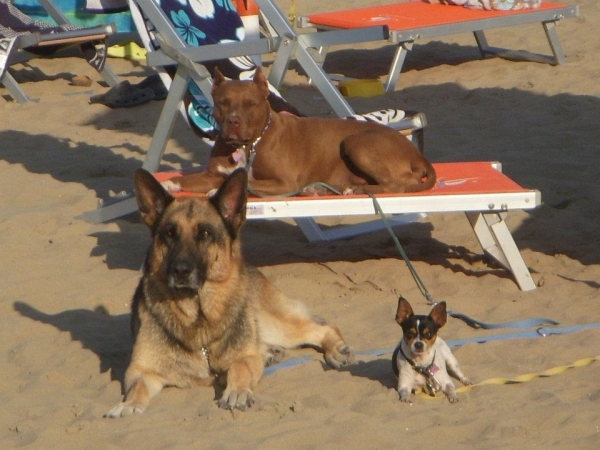 Spiagge con ingresso per animali in Salento