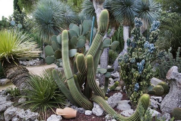 Oasi di piante grasse a Giuggianello: che esperienza!